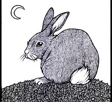 Cotton Tail by Anita Inverarity