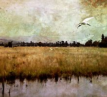 Wetlands-Yarra Glen by Margi