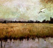 Wetlands-Yarra Glen by Margi