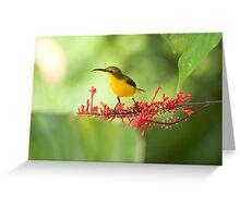 Yellow Bellied Sunbird Greeting Card
