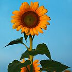 Sunflower Portraits #1 by Odille Esmonde-Morgan