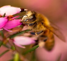 Cute Little Bee by Josie Eldred