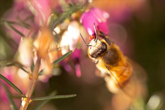 Cute Little Bee II by Josie Eldred