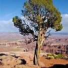 Tree I by Erwin G. Kotzab