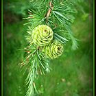 Two lone pine cones. by Heather Goodwin