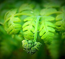 fern I by rina  thompson
