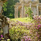 Stourhead Garden by Loree McComb