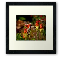 A Feast For Finches Framed Print