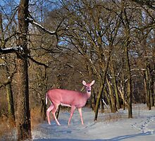 Deer In The Forest by Linda Miller Gesualdo