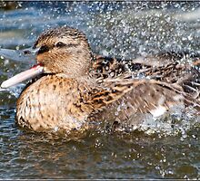 Happy Bath Time by M.S. Photography/Art