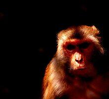 Deadly monk' by Vivek George Koshy