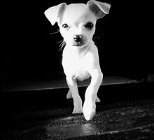 Aw Chihuahuas!! by Kristi Johnson