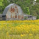 Barn Amid Goldenrods by Sheryl Gerhard