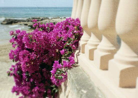 Bougainvillea by the sea by Astrid Ewing Photography