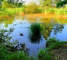 natural pond by Daidalos