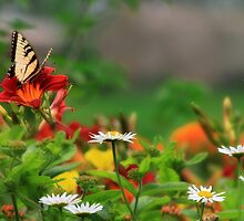 Garden Delight by Lori Deiter