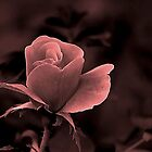 *Romantic Rose* by DeeZ (D L Honeycutt)