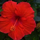 Red Hibiscus by Eileen Brymer