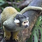 Spider Monkey by Leanne Allen