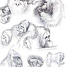 Orangutan sketches by Marcus  Gannuscio
