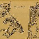 orangutan skeleton by Marcus  Gannuscio
