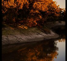 Reflections of the River Gums!  by Anna Ryan