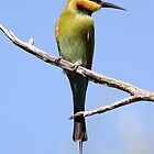 rainbow bee eater by birdpics