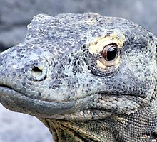 Komodo dragon by Larry Baker