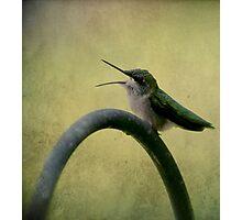 Hummingbird Talk  Photographic Print