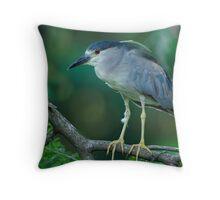 Black Crowned Night Heron Scanning For Fish Throw Pillow