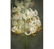 Lily My Love Photographic Print