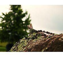 Spring Pole Drill (Petrolia Discovery) Photographic Print