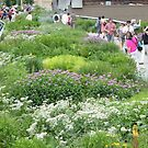 High Line Flowers, New York's Elevated Garden and Park by lenspiro