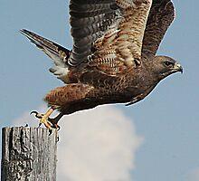 Taking Flight by Alyce Taylor