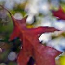 Autumn delight #13 by LouD