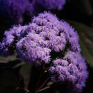 Purple Beauty by Tanya Rossi