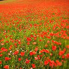 Scattered Poppies by WillOakley