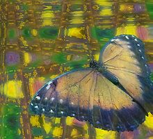 Butterfly Dreams by Carol Bleasdale