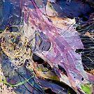 seaweed three by helveticaneue