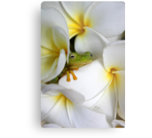 Frangipani Dreaming - Award Winner Metal Print