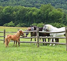 Meeting of the Manes by Chris Snyder