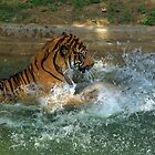 Splish Splash! by Chuck Chisler