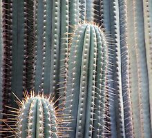 Cactus neighborhood by CharliSL