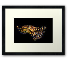 Blue Ringed Octopus Framed Print