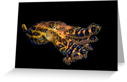 Blue Ringed Octopus by MattTworkowski