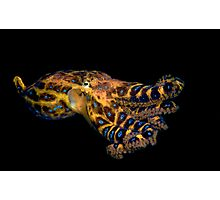 Blue Ringed Octopus Photographic Print