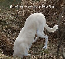 Explore new possibilities by Sally J Hunter