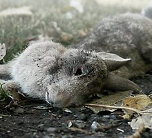 Roadkill Rabbit by Photogothica
