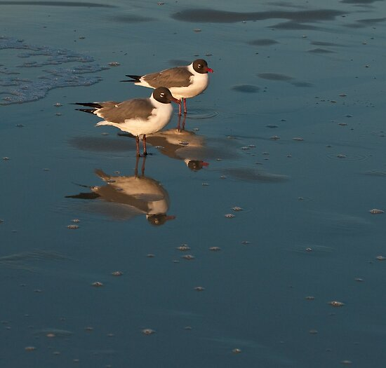 GULLS AND REFLECTION by RGHunt