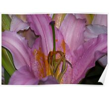 Sunny Bonaire Oriental Lily Poster